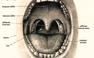 Клебсиелла пневмония в горле симптомы