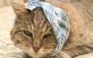 Капли от отита для кошек