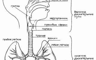 При первых симптомах простуды лекарства